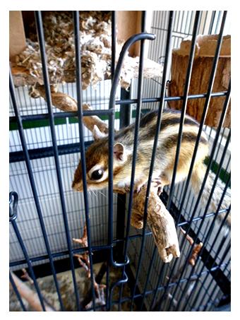 Notre écureuil d'accueil Tic-Tic