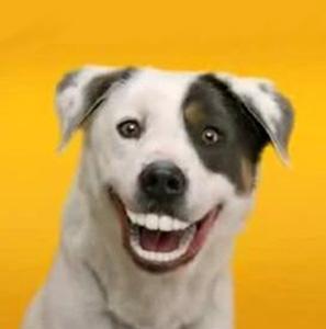 Dentisterie
