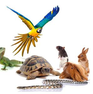 Nouveaux animaux de compagnie (NAC)